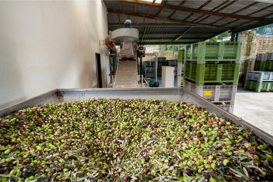 turkish-olive-oil-factory